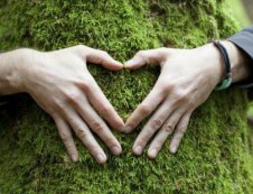 Los maravillosos árboles nos ayudan